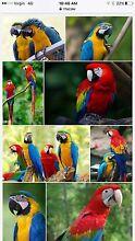 Bird handler/attendant Meadowbrook Logan Area Preview