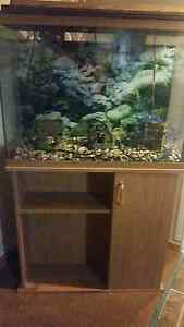 40 Gallon Fish Tank w/stand