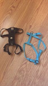 Dog harnesses, collars, leashes
