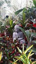 Instant Balinese Garden: Crotons, Cordylines, Calatheas etc. Park Ridge Logan Area Preview