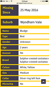 Still trying to find my bludge (sulphur crested cockatoo Wyndham Vale Wyndham Area Preview