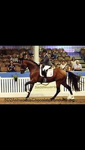 Ashwood Park Equestrian Luskintyre Maitland Area Preview
