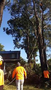 M & M Tree Services Hornsby Hornsby Area Preview