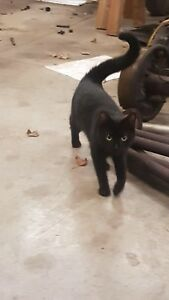 FOUND black female cat with collar