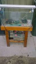 3 fish tanks with stand and light Klemzig Port Adelaide Area Preview