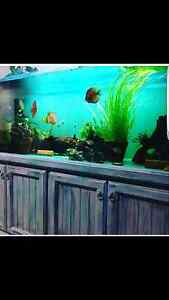 Fish tank for sale 6ft×2ft×2ft Liverpool Liverpool Area Preview