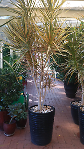 Plants for sale Wanneroo Wanneroo Area Preview
