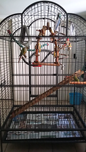 Huge Bird Cage - excellent condition NO RUST suit large birds Ashmore Gold Coast City Preview