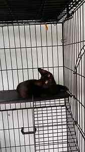 Looking for forever home Belmore Canterbury Area Preview