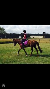 CONFIDENCE BUILDER/ BEGINNERS ALLROUNDER PONY East Brisbane Brisbane South East Preview