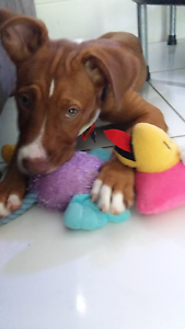 Mad Paws pet sitting Trinity Park Cairns Area Preview