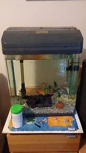 Fish tank with fish + extras Wahroonga Ku-ring-gai Area Preview