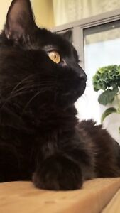 Beautiful cat looking for a home he can have a friend in