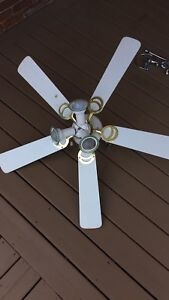 Free ceiling fan with lights