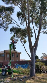 TREE REMOVAL AND STUMP GRINDING Blacktown Blacktown Area Preview
