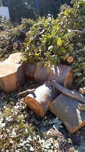 Free Beautiful huge amountTree stumps,logs, firewood Fig Tree Pocket Brisbane North West Preview