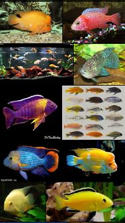 Wanted: Looking for cheap tropical fish