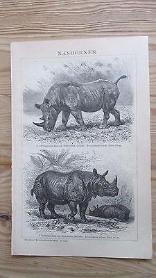 Druck, Bild, Antiquität, Nashörner, Rhinozeros