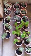 Assorted plants from $2, succulents, agapanthus etc Leda Kwinana Area Preview