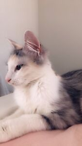 Kittens free to a good home only - 1 female kitten left (pictured)