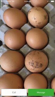 Wanted: Fertile eggs