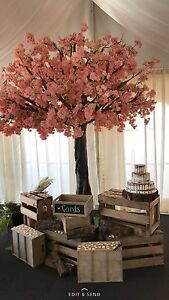 Pink cherry blossom tree 3.5m hire Peakhurst Hurstville Area Preview