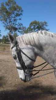 Double Bridle - Keifffer with bits
