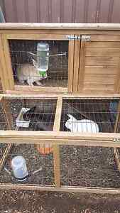 Rabbits + hutch for sale Riverwood Canterbury Area Preview
