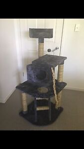 Cat playground Ashmore Gold Coast City Preview