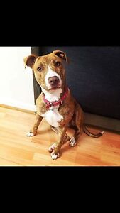 Rescue Diva for One Year Scarborough Stirling Area Preview