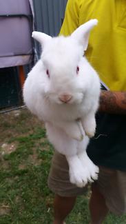 Rabbit and hutch