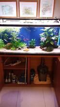 Complete Established 4 foot fish tank Burpengary Caboolture Area Preview