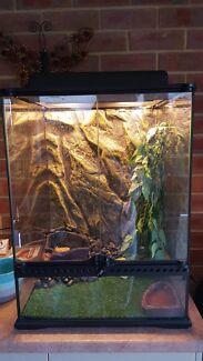 EXO-TERRA frog tank full setup