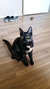 Regretfully re-homing Kiera (cat) Carrum Downs Frankston Area Preview