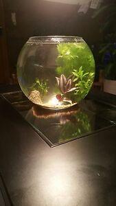 Designer Goldfischglas mit Deko und Wasserpflanzen, Miniaquarium, Vase, Echtglas
