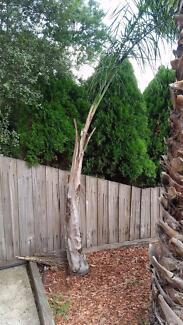 Palm Tree in Reservoir