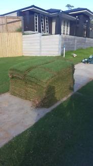 Free wintergreen turf 60m2 approx