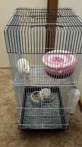 Baby girl rats and as new cage Metford Maitland Area Preview