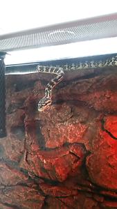 Snake and urs vivarium Kapunda Gawler Area Preview