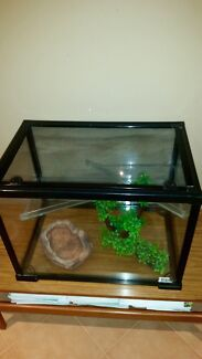 REPTILE TANK Kinross Joondalup Area Preview
