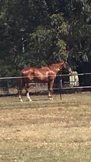 Horse Agistment