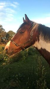 Project Horse For Lease With Option To Buy Bendigo Bendigo City Preview