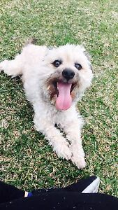 freee to a loving home Plumpton Blacktown Area Preview