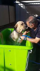 DOG WASH ( Hydrobath)..Mobile Wanneroo Wanneroo Area Preview