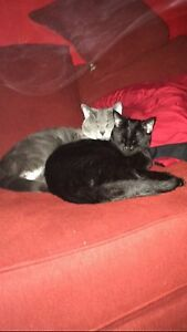 Black 2 yr old female cat and new born kittens free