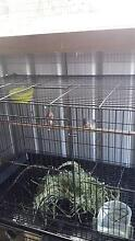 one breeding pair zebra finch and a black cage Noble Park Greater Dandenong Preview