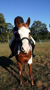 PIXIE - 14hh Paint Mare Petrie Pine Rivers Area Preview