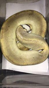 Snake list