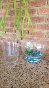 Glass Fish Bowl & Glass Terrarium