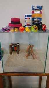 Hermit Crab Enclosure Rothwell Redcliffe Area Preview